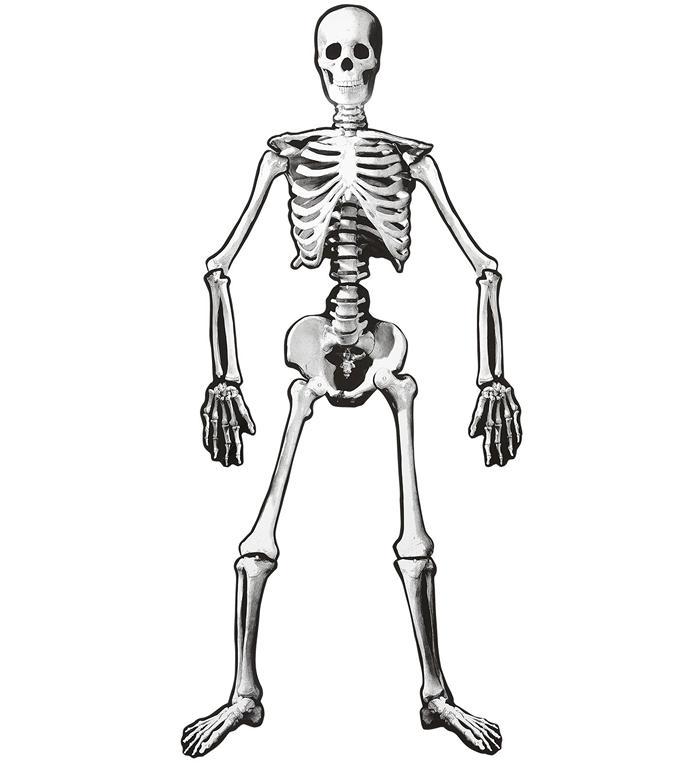 Bøjeligt skelet