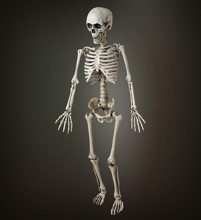 Skelet, 120 cm.
