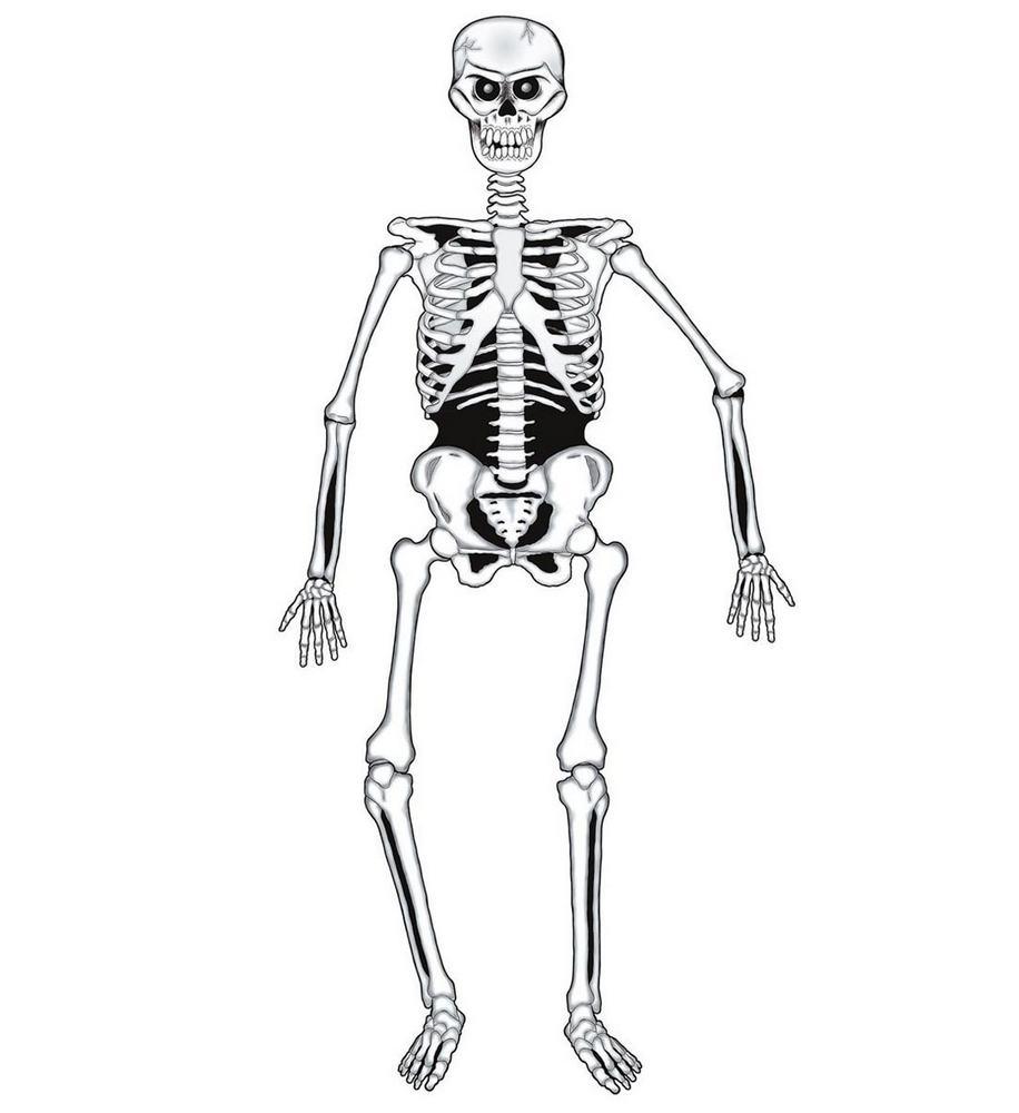 Skeleton dekoration